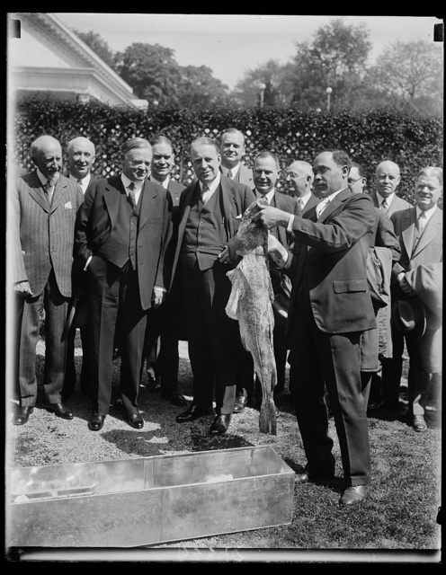 President Hoover receives huge codfish from members of Chamber of Commerce of Boston. Members of the Boston, Mass. Chamber of Commerce, who are in Washington, on their way home from a cruise to the Pacific Coast, presented President Hoover with a huge cod when they called on him at the White House today. In the picture President Hoover and Senator David I. Walsh, of Massachusetts, can be seen inspecting the fish held by a White House servant