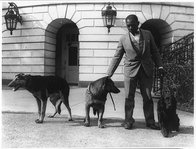 [Robert R. Robinson, kennel master at the White House for Herbert Hoover's dogs, Buckeye, a German police dog; King Tut, a Belgian police dog; and Englehurst Gillette, a Gordon setter]
