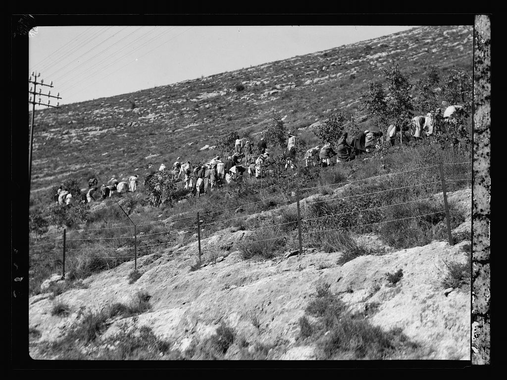 Agriculture, etc. Government reforestation near Bab el Wad. Labourers planting trees