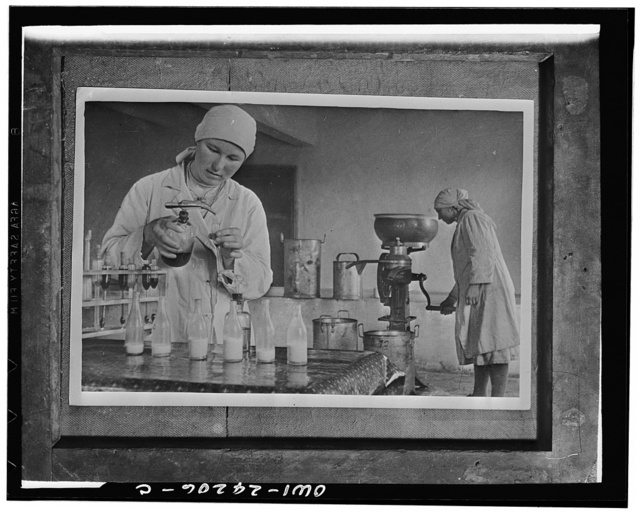 Chapayevsk collective Ukraine, USSR (Union of Soviet Socialist Republics). Collective farmer woman who is manager of the dairy farm checking the quality of the milk