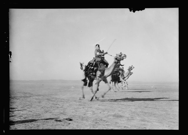 Close of the 1930 locust campaign. Bedouins racing and feasting at Beersheba on June 30th, 1930. The winning camel on his final stride