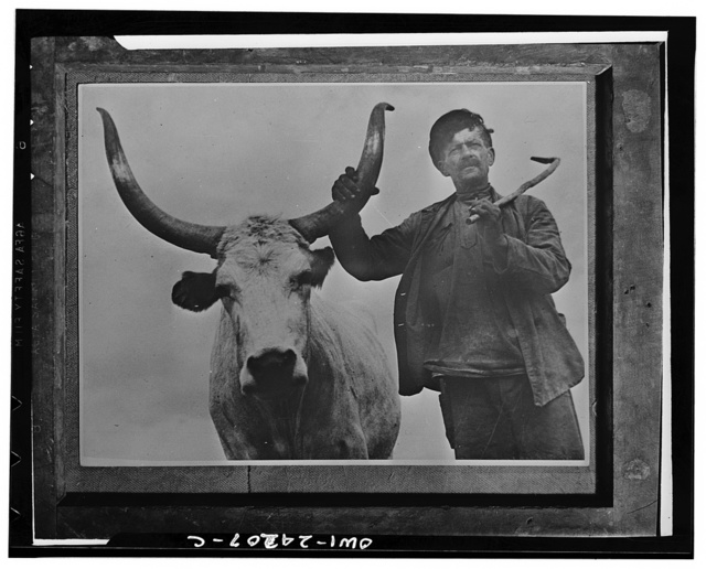 Collective farmer with a prize bull (longhorn) in the USSR (Union of Soviet Socialist Republics)