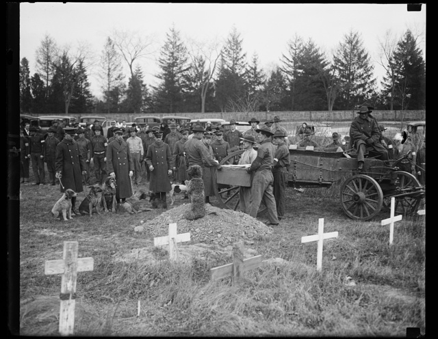 Finnigan buried with military rites. The photograph shows one of the sad scenes at the funeral of Aloysius Smith Neff Finnigan, buried with military honors at Fort Myer, Va. Finnegan, in case you don't know who he was, was mascot of the guardhouse at Fort Myer. He left a colonel's home six years ago to live with the unwilling guests of the guardhouse and every morning since then the little Aberdeen terrier rode the ash wagon as it made the rounds. Thus, it was fitting that the ash wagon served as his caisson. Reaching the grave, the regiment band played a funeral dirge, a fitting funeral oration was read, a squad fired three salutes, taps were sounded, and with the muffled roll of drums his friends marched back to the guardhouse. Even his canine friends were there to pay their silent tribute. One of them, Barnacle Billm is shown sitting atop the mound of dirt from the grave as the casket is being borne forward