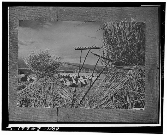 Kiev (vicinity), Ukraine, USSR (Union of Soviet Socialist Republics). Dinner time during the harvest season on a collective farm