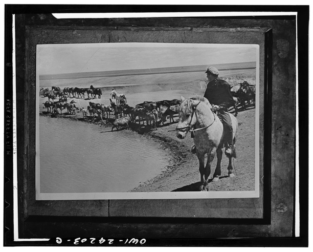 Kuibyshev, USSR (Union of Soviet Socialist Republics). Watering the horses at a pond on the steppes on a collective farm