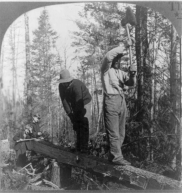 "Muscular ""lumber jacks"" hewing out trees in the forests of Northern, Minnesota"
