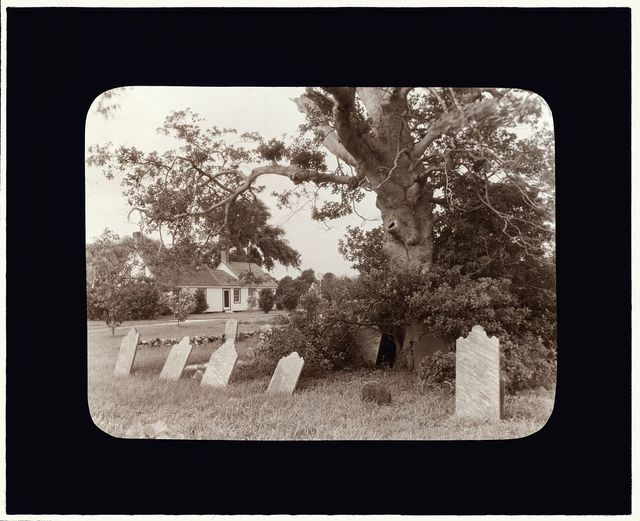 [Warwick, Quinby vicinity, Accomac County, Virginia. Grave markers under an oak]