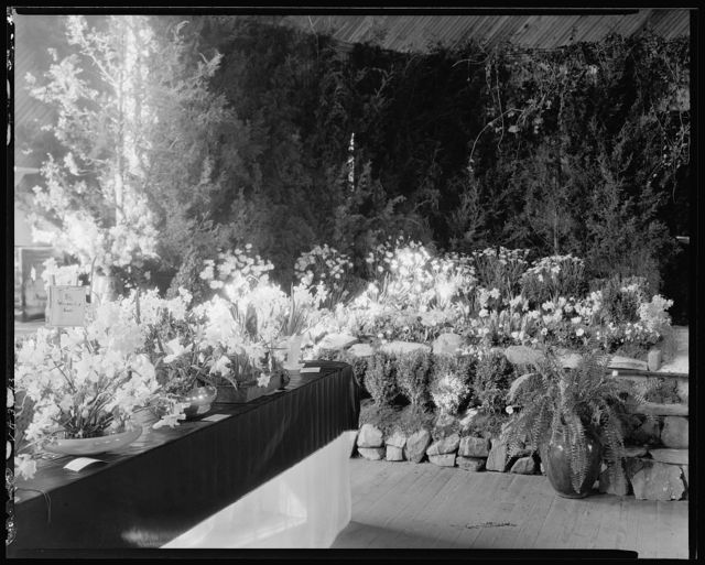 Middleburg Flower Show, Middleburg, Loudoun County, Virginia