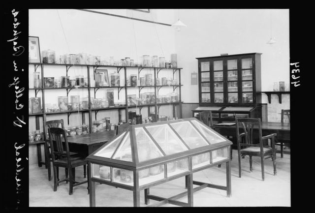 Iraq. (Mesopotamia). Royal College of Medicine of Iraq. Baghdad. Medical College. The Pathological Museum