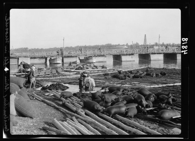 Iraq. Mosul. Mosul bazaars and river scenes on the Tigris. The Tigris. Construction of river rafts on inflated goatskins. Mosul bridge seen in distance