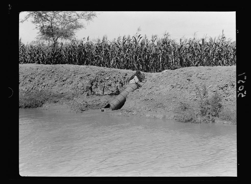 Agriculture in Egypt. Primitive irrigation. A spiral tube cylinder turned by a crank, to raise water