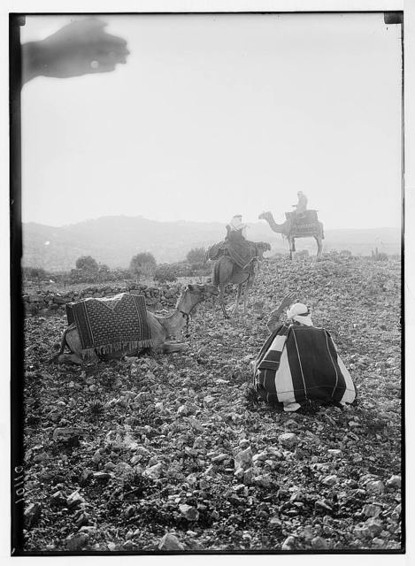 Bethlehem. Distant silhouette of Bethlehem with three camels at standstill