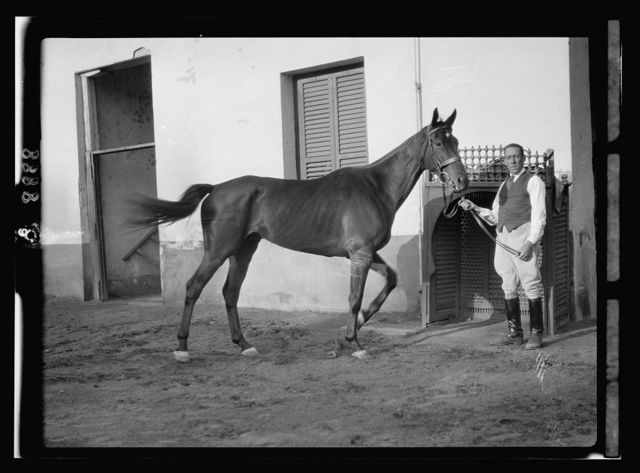 Egypt. Cairo. Hotels. Mena House. Riding horse at the stables