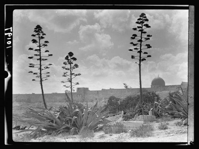 Golden Gate & east wall seen through group century plants