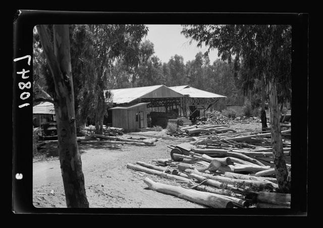 Saw mill in the eucalyptus woods of Khadera. The saw mill