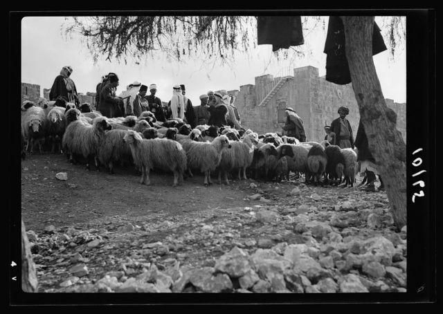 Sheep market at Herod's Gate