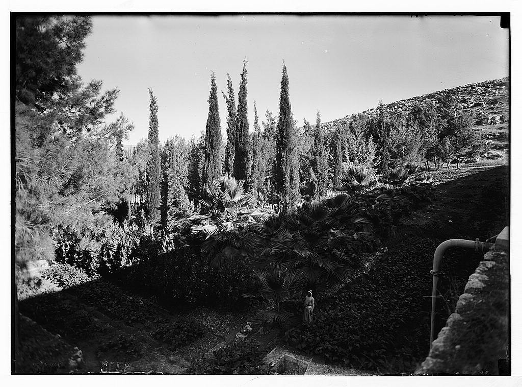 Solomon's Pools & ancient aqueducts. Grove of pines, palms & cypresses between middle & lower pool.