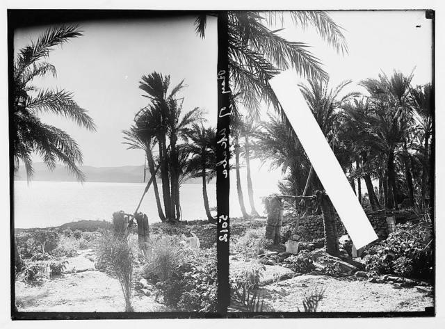 The Araba. (Southern end of the Great Jordan Rift). Negeb el-Shurk, Akaba (Elath), Gulf of Akaba and el-Kuntilla. Gulf of Akaba. Akaba. An irrigation sha'aduf. In a palm and vegetable garden; [Another view of a sha'aduf].