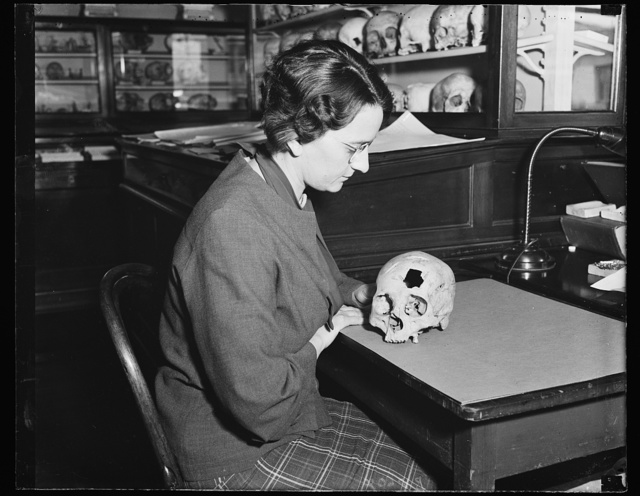 Ancient brain surgery. Miss Helen Hecker, secretary to Dr. [...] Curator of Physical Anthropology of the Smithsonian Institution, poses with an ancient trephined skull discovered in Alaska by Dr. Hrdlicka, which is believed to prove that brain surgery was practiced there as long ago as 2,000 years. Dr. Hrdlicka made his discoveries from the lower strata of an ancient settlement on Kodiak Island. He believes that trephining among the Indians was a practical surgical operation, designed to relieve pressure against the brain from a skull fracture, and to remove bone splinters. It also is believed possible that these holes were bored in skulls, at times, to let out evil spirits causing headaches, 11/23/35