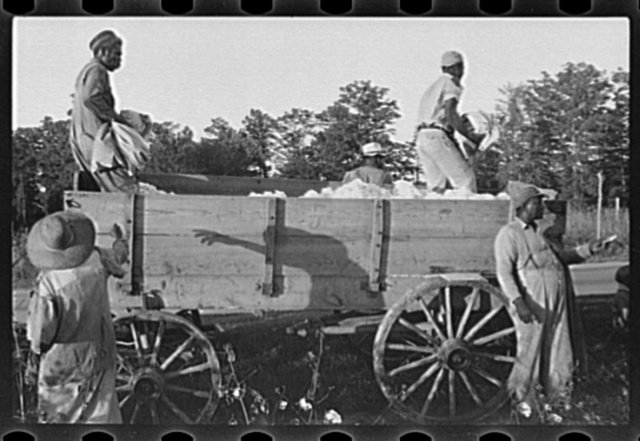 Bringing in cotton for weighing, Pulaski County, Arkansas