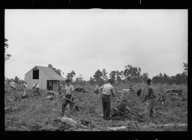 Clearing land, North Carolina, Penderlea Homesteads