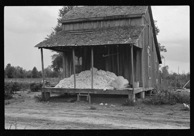 Cotton on porch of sharecropper's home, Maria plantation, Arkansas