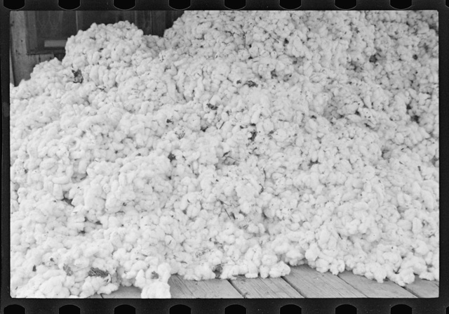 Cotton on porch of sharecropper's home. Maria plantation, Arkansas