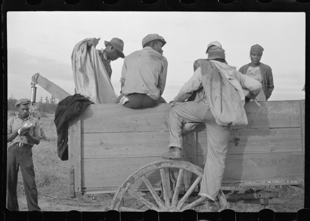 Cotton pickers at close of day, Pulaski County, Arkansas