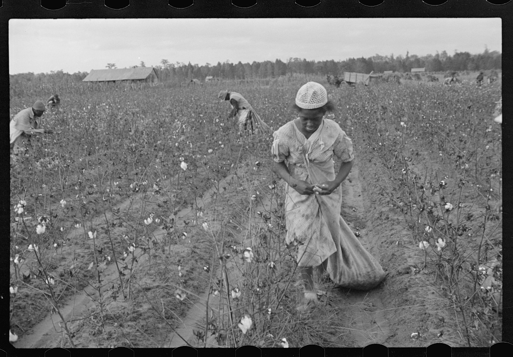 Cotton pickers, Pulaski County, Arkansas