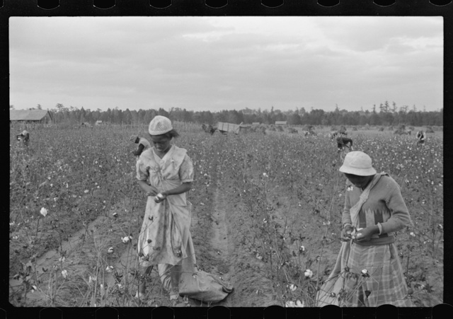 Cotton pickers, Pulaski County, Arkansas