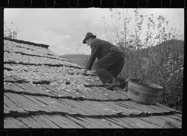 Drying apples, one of the few sources of income for the mountain folk, Shenandoah National Park, Virginia