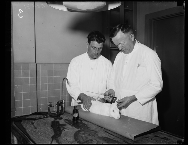 Experimenting on rabbit. This little rabbit is doing its bit for science and humanity as it is used for experiments in the Public Health Service. Irvin Norfalk, Laboratory Attendant, left, and Dr. Charles Armstrong, Surgeon and Specialist in virus disease