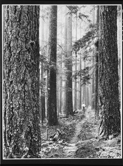 Forest trail in Washington
