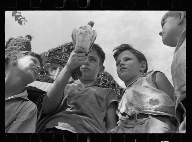 Healthy white children, Washington, D.C.
