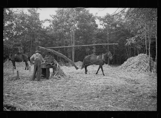Pressing sorghum cane, Fuquay Springs, North Carolina