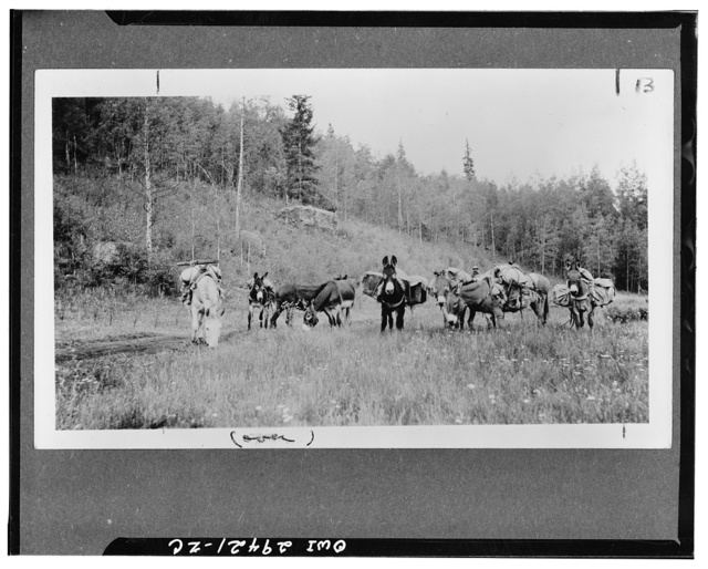 Rio Grande canyon, Colorado. Pack train heading for camp on an old road used 60 years ago for freighting between Denver and Pueblo and Silverton and Durango