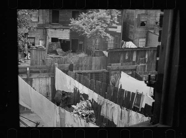 Slum backyard, Washington, D.C.