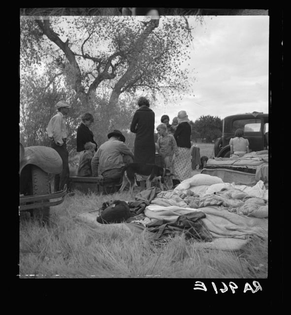 Squatters along highway near Bakersfield, California. Penniless refugees from dust bowl. Twenty-two in family, thirty-nine evictions, now encamped near Bakersfield without shelter, without water and looking for work in the cotton