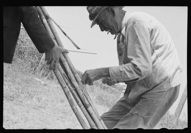 Sugarcane grower, Plaquemines Parish, Louisiana