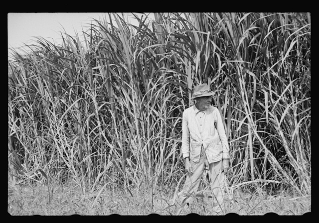 Sugarcane worker, Plaquemines Parish, Louisiana