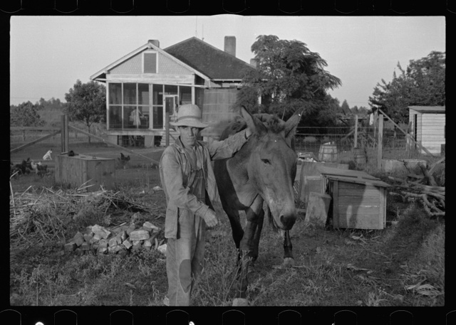 Tenant farmer with mule given him by the Resettlement Administration, Plaquemines Parish, Louisiana