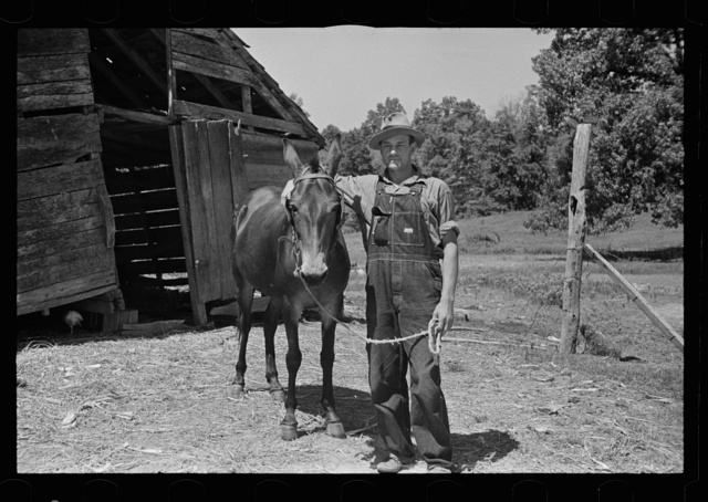 Tenant farmer with mule which has been given to him by the Resettlement Administration, Lee County, Mississippi