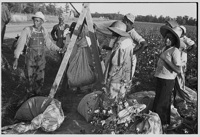 Weighing in cotton. Pulaski County, Arkansas