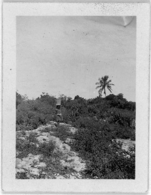 [Woman standing in distance, possibly from the visit by Alan Lomax and Mary Elizabeth Barnicle to Andros Island in the Bahamas]