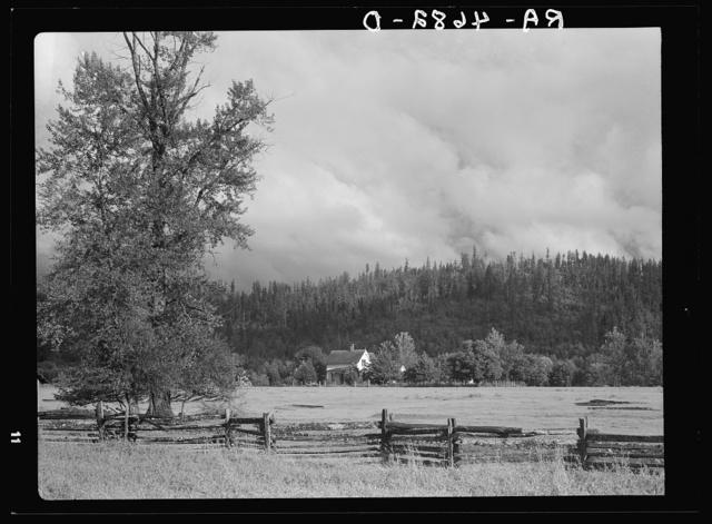 An Oregon dairy farm in the McKenzie River Valley, Oregon