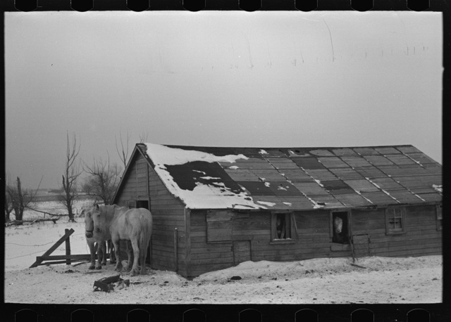 Barn on Joe Beving farm near Dickens, Iowa. Note condition of roof. Beving rents this farm on a cropshare basis