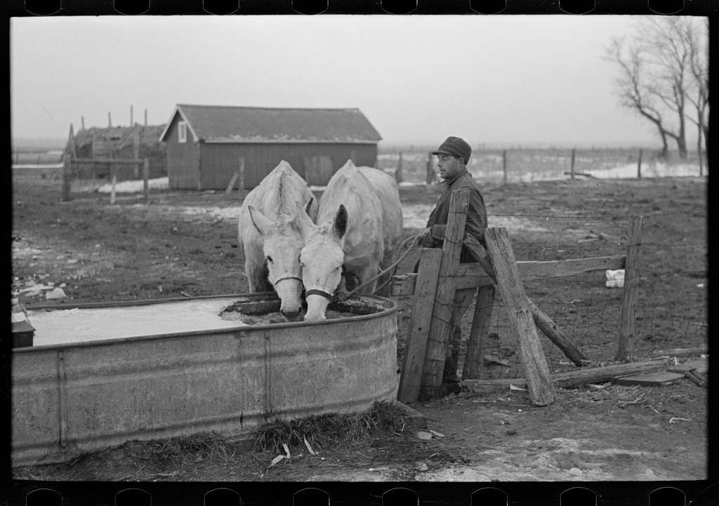 Breaking ice to water mules on Rex Inman's farm near Estherville, Iowa. This farm, 360 acres, is rented from loan company by tenant