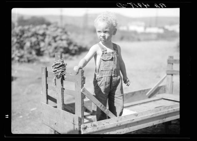 Child of migratory worker. Yakima, Washington