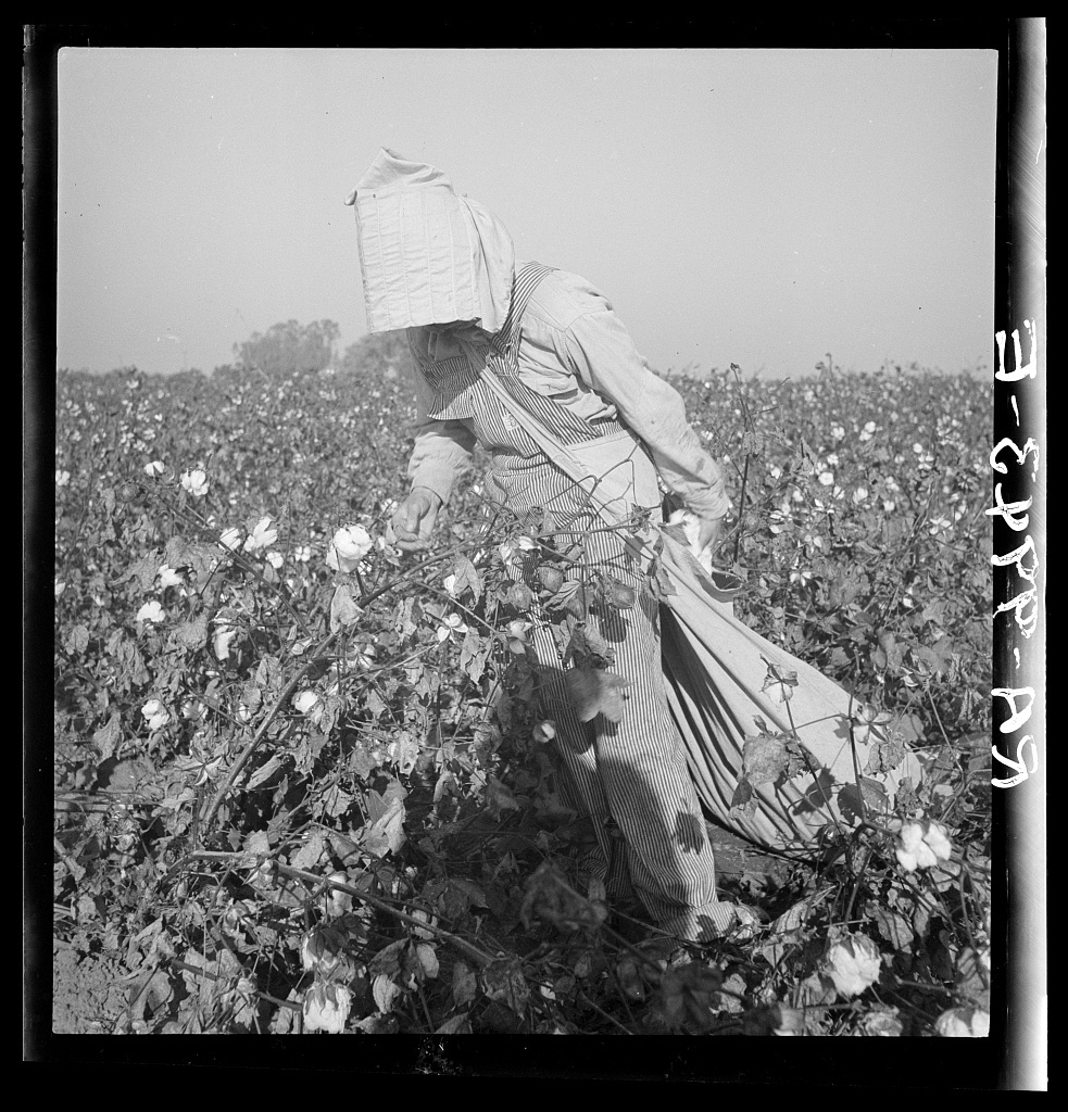 Cotton picker. Southern San Joaquin Valley, California