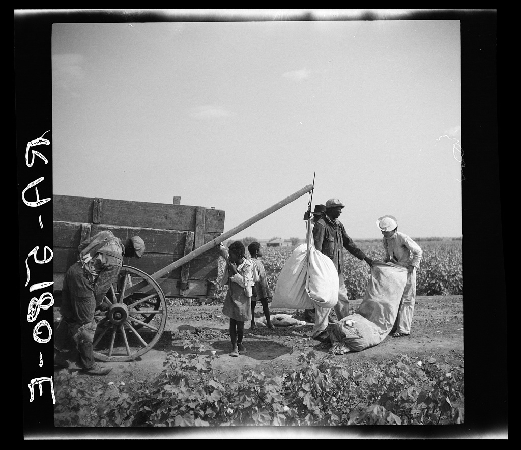 Cotton pickers. Kaufman County, Texas